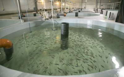 The El Puerto de Santa María aquaculture cluster will have a new fish farm